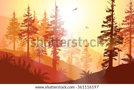 West Coast forest in warm sunlight - stock photo