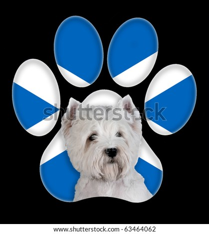 West Highland White Terrier dog portrait with a background of Scotland flag in paw print - stock photo