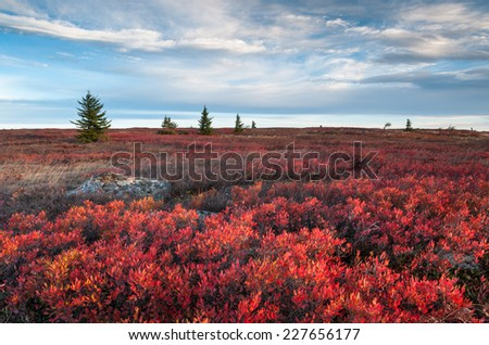West Virginia Dolly Sods Wilderness Area Red Heath Autumn Landscape - stock photo