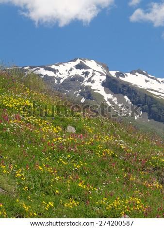 Western Alps, Italy, Aosta valleys, colorful mountain meadow - stock photo