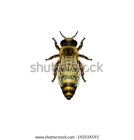 Queen Bee Logo stock-photo-wes...