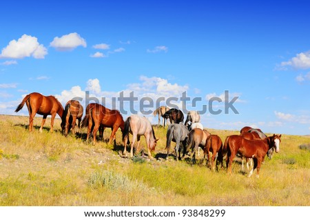 Western horses grazing on Montana grassland - stock photo