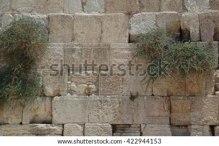 Western  Wall. Jerusalem and plant,  - stock photo