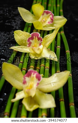 Wet background â?? yellow orchid on bamboo grove  - stock photo