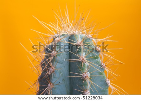 Wet cactus on yellow background - stock photo