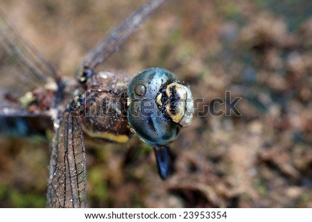 Wet dragonfly - stock photo
