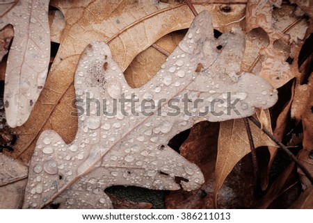 Wet fallen autumn leaves covered with rain drops sitting on a still pond - stock photo