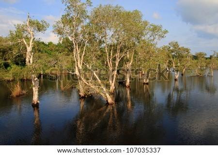 wet feet forest in Thailand - stock photo