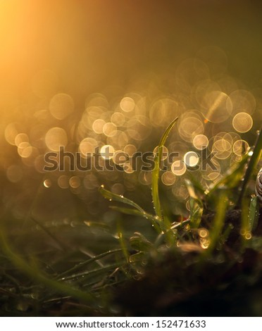 Wet grass - stock photo