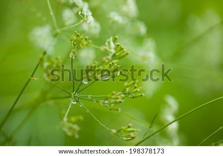 wet grass natural macro background - stock photo