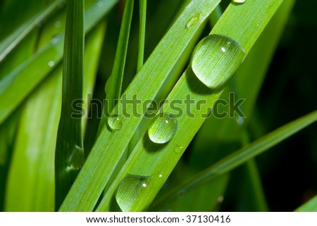 Wet Grass - Up Close - stock photo