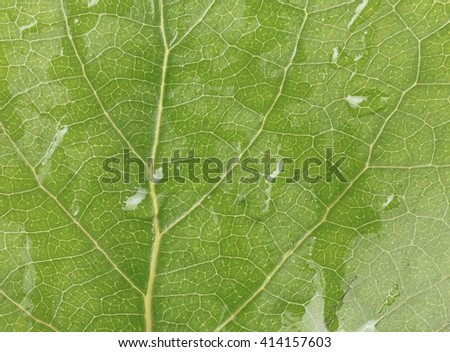 Wet green leaf texture. Green leaves background closeup - stock photo