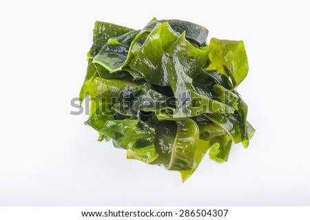 Wet green marine algae pile close up macro isolated on white background - stock photo
