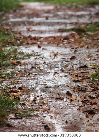 wet ground floor of a pathway in tropical jungle with brown leaves falling on green grass and brown soil after heavy rain - stock photo