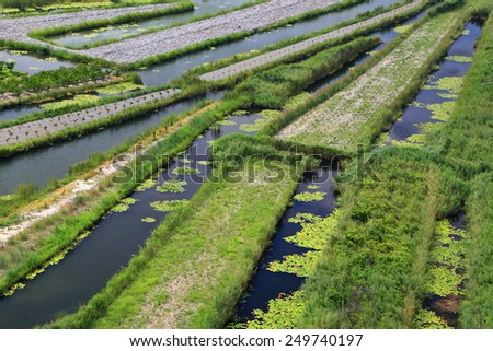 Wet land with rich crops in the Neretva delta, Croatia - stock photo