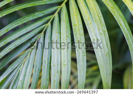 wet palm leaf after the rain - stock photo