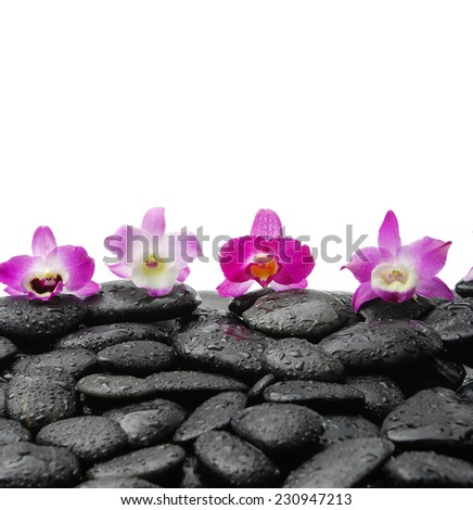 Wet pebbles and four pink orchids  - stock photo