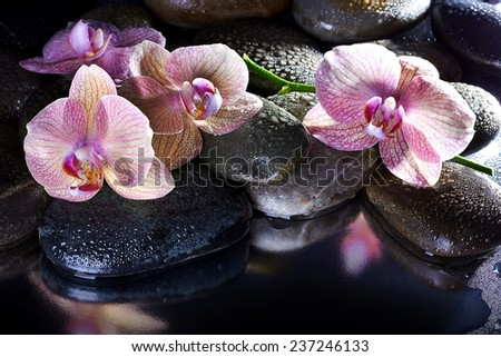 Wet spa pebbles and pink orchids - stock photo