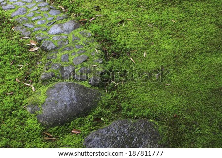 Wet stone steps covered with moss - stock photo