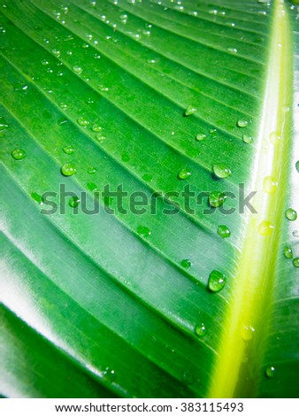 Wet tropical leaf background - stock photo