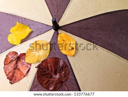 Wet umbrella and dry yellow  leaves - stock photo
