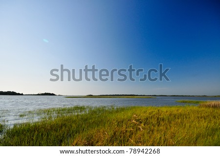 Wetland Area at Shell Mound Unit in Lower Suwannee National Wildlife Refuge - stock photo
