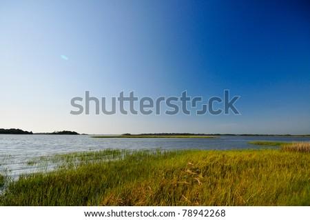 Wetland Area at Shell Mound Unit in Lower Suwannee National Wildlife Refuge - stock photo