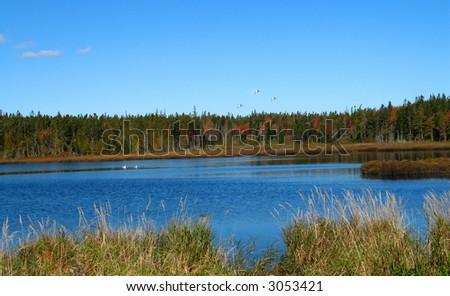 Wetlands along the coast of Maine- Autumn - stock photo