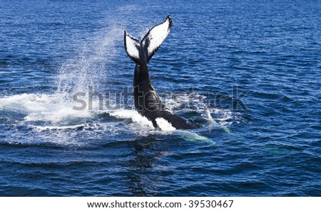 Whale. - stock photo