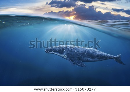 whale in half air - stock photo