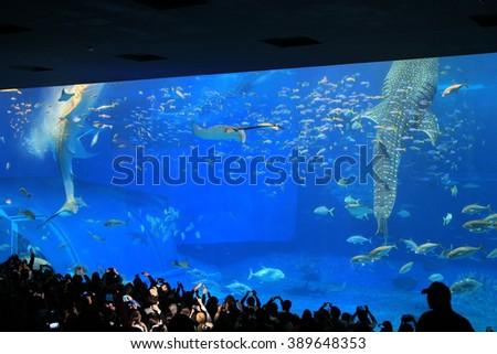 Whale shark at Churaumi aquarium in Okinawa - stock photo