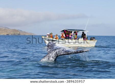 WHALE WATCHING TOUR IN BAJA, CALIFORNIA, MEXICO - February 20, 2015: Whale watching in Ojo De Liebre Lagoon in Baja, California, Mexico - stock photo
