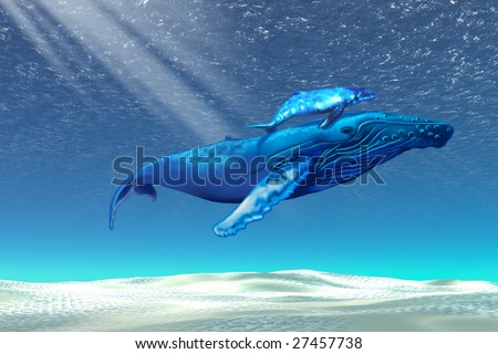 WHALES - Mom and baby Humpback whales swim through clear tropical waters - stock photo