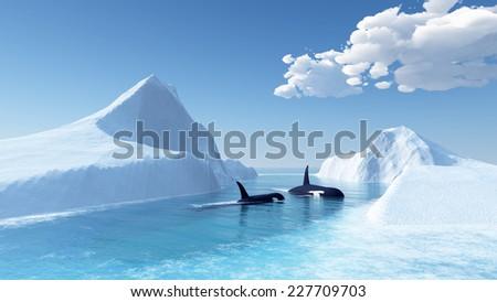 whales swim in the ocean and iceberg - stock photo