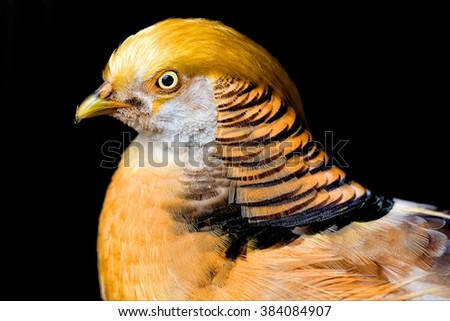 what a wonderful bird ! - stock photo