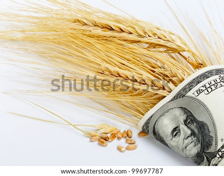 Wheat and dollar banknote in close up - stock photo