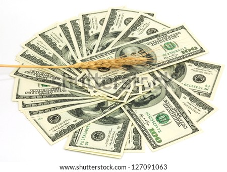 wheat and dollars - stock photo