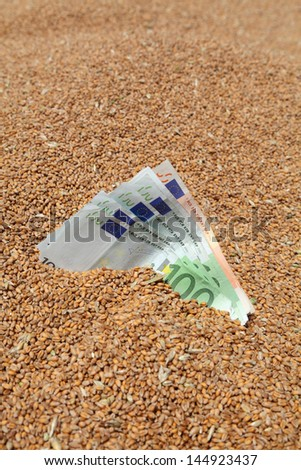 Wheat and Euro banknote in close up - stock photo