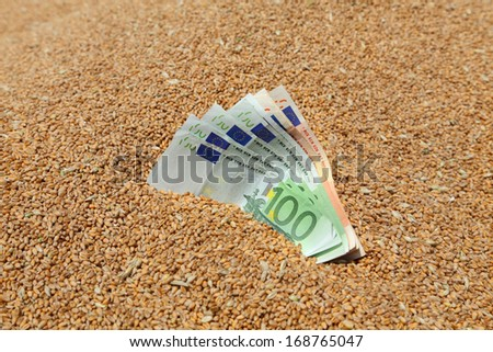Wheat and Euro banknote in closeup, selective focus - stock photo