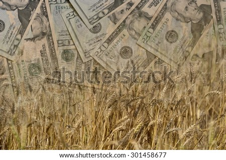 Wheat and US Dollars or Money or currency in double exposure shot, demonstrating earnings or spend in Agriculture - stock photo