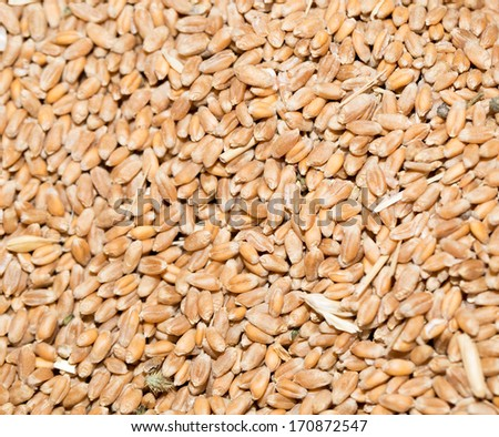 Wheat background view from the top - stock photo