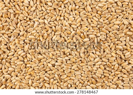 Wheat background view from the top close up - stock photo