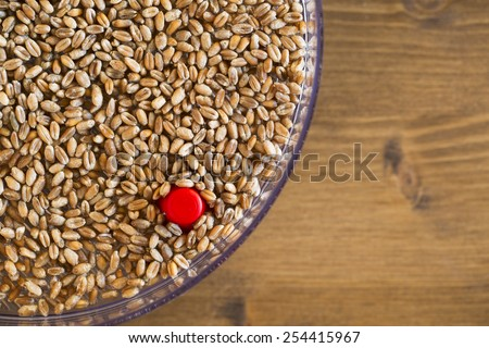 Wheat berries for sprouting in sprouting tray. - stock photo