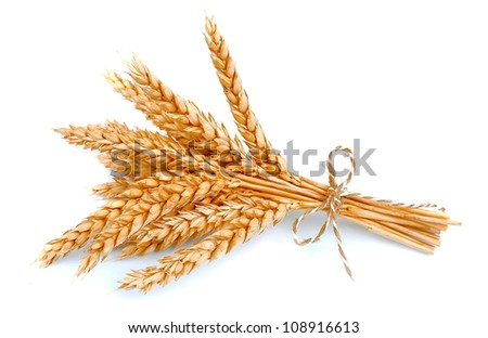 wheat bunch isolated on white - stock photo
