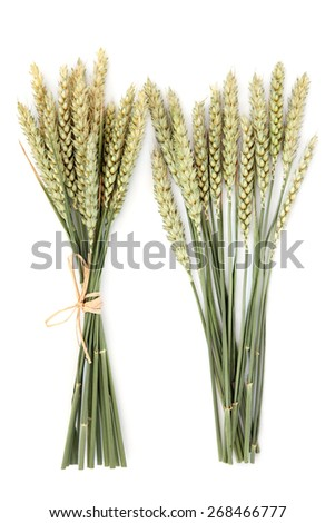 Wheat ear bundles over a white background. - stock photo