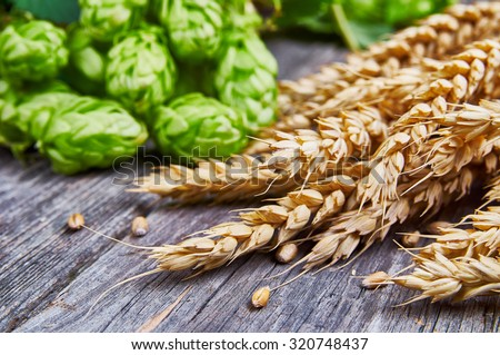 Wheat ears and fresh hops on the wooden table - stock photo