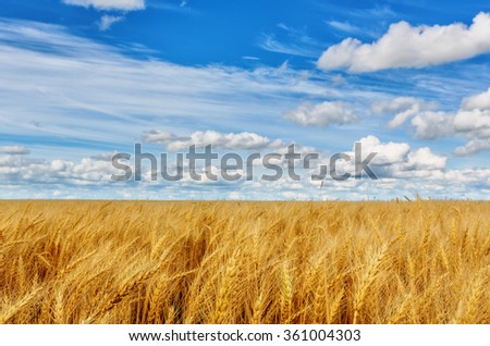 Wheat ears on a background of field and cloudy sky (shallow dof) - stock photo