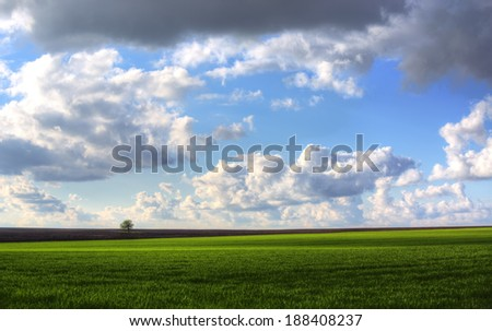 Wheat field against blue sky with white clouds. - stock photo