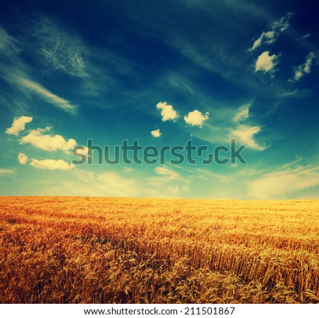 wheat field and clouds on sky, summer landscape with retro colors - stock photo