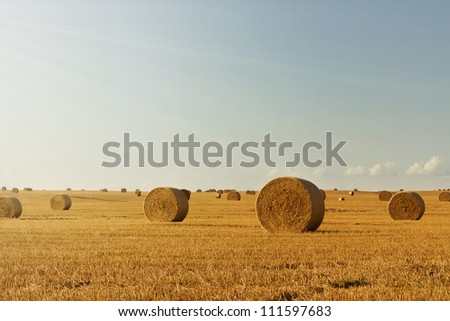 Wheat field at harvest with copy space - stock photo